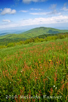 ------ Max Patch ------ May 22, 2010